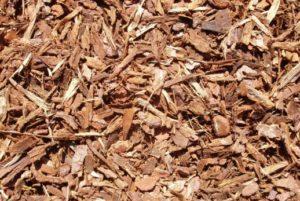 Pinus Maritima Boomschors bodembedekker