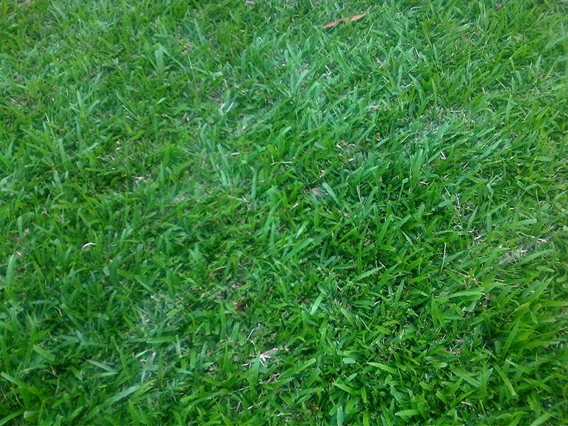 Beschuit Gras Grasmatten